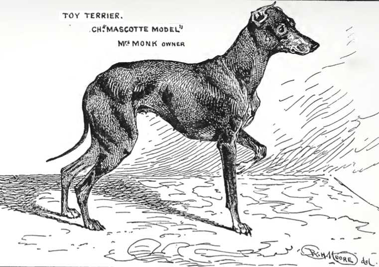 CH (ENG) Mascotte Model (c.1900) [English Toy Terrier]