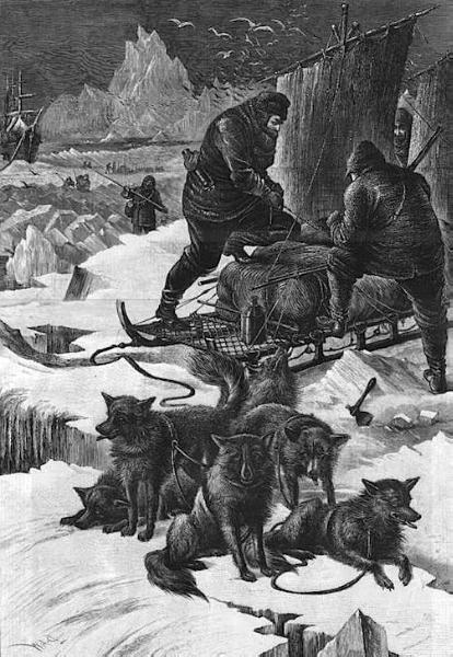 Dog From Peary's North Pole team (c.Early 1900s)