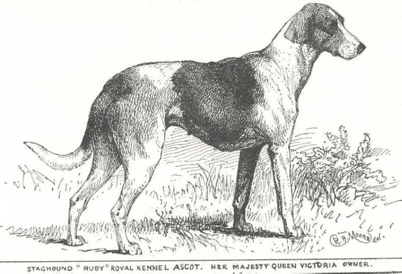 Ruby of Royal Kennel Ascot (c.1900) [Queen Victoria's Stagho