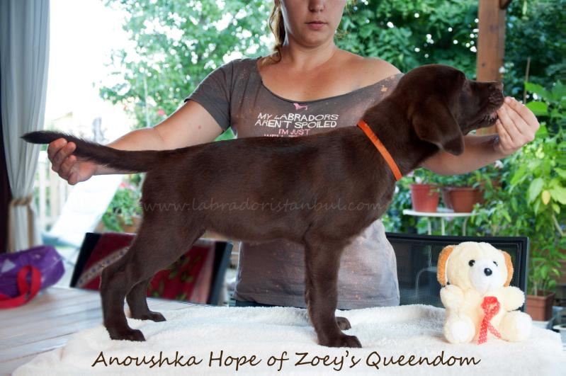 Anoushka Hope of Zoey's Queendom
