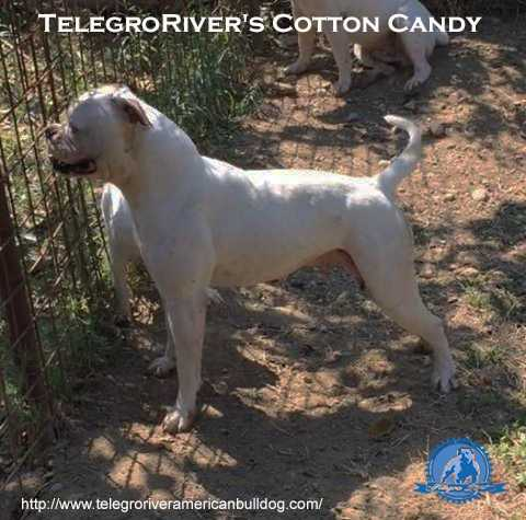 TelegroRiver's Cotton Candy