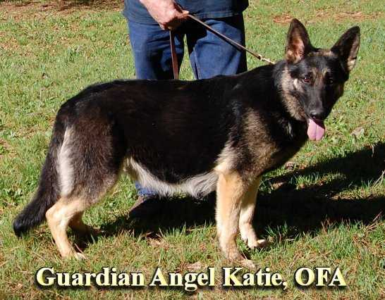 Guardian Angel Katie