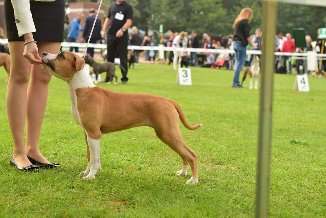 GODDESS OF VICTORY Amstaff From Angel
