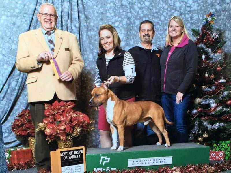 AKC Pointed Cimar's Power of Eleven