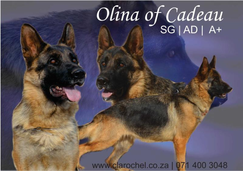 SG2, Breed Surveyed *Olina of Cadeau
