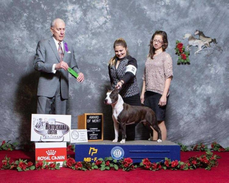 AKC GCH CH; GCH.RO; CH.RO,MNE,KOS LBK's Gone Rogue with Aiyana