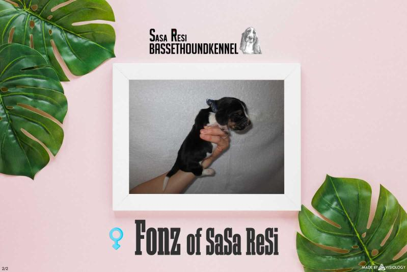 Fonz of Sasa Resi