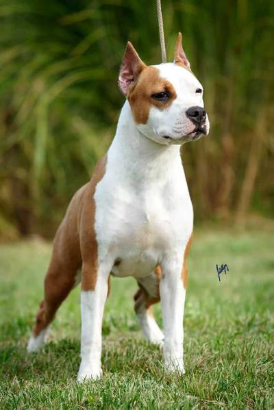 Diana King of Montenegro Amstaff