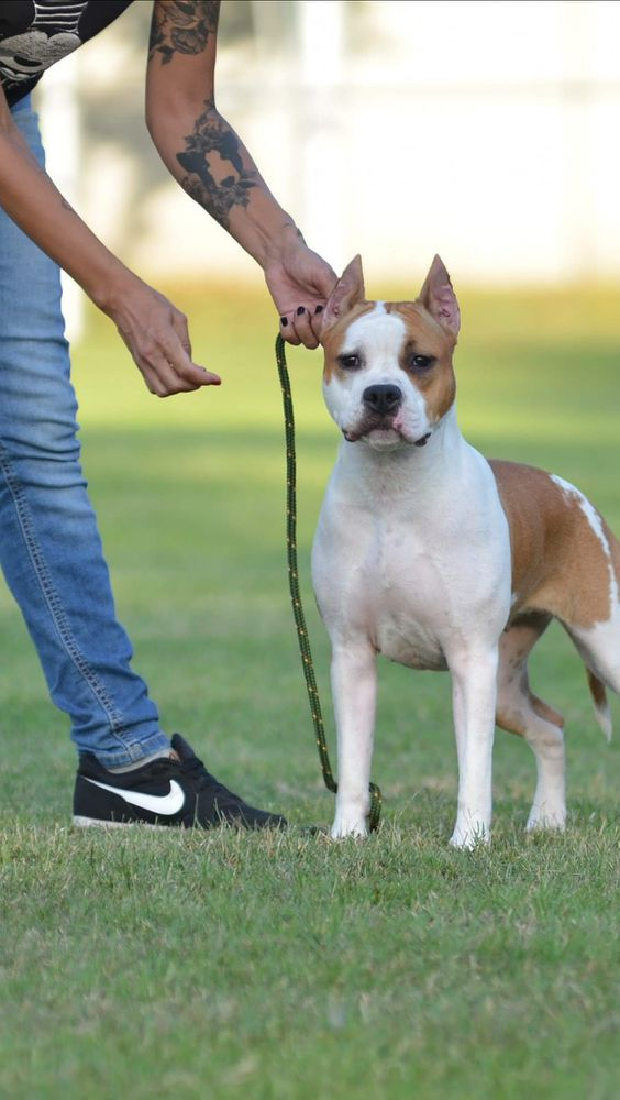 White-amSTAFF Listen To You Heart