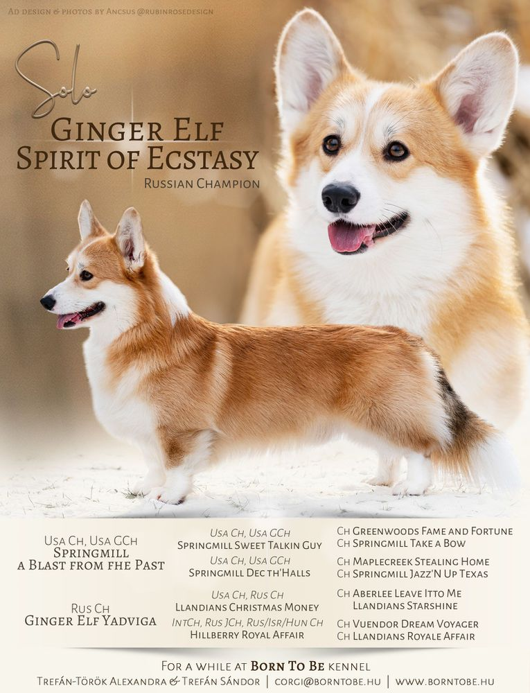 Ginger Elf Spirit of Extasy