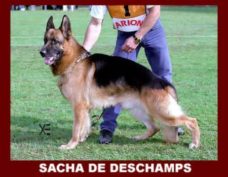 Sacha de Deschamps