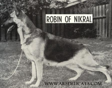Robin of Nikral