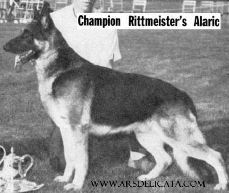 (USA) CH Rittmeister's Alaric