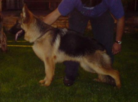 athos clever canin
