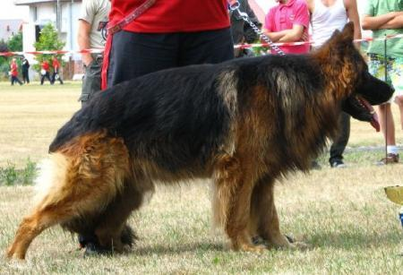 CH.PL BEST IN SHOW CHAMP Rymbas'