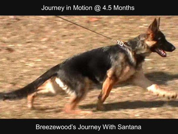 Breezewood's Journey With Santana