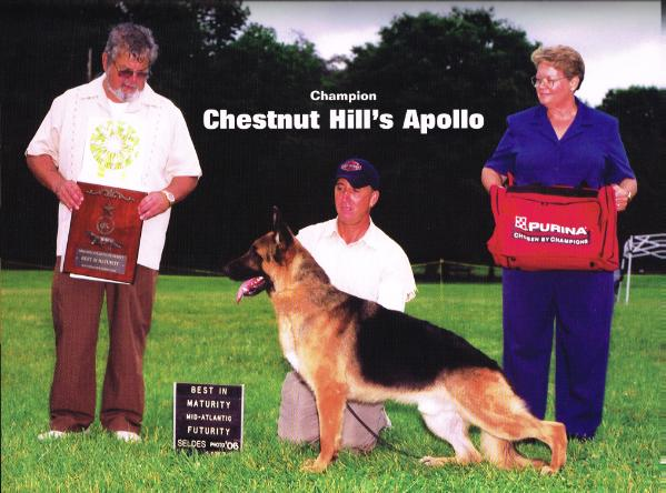 CH (US) Chestnut Hill's Apollo