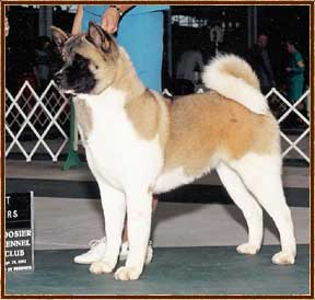AKC CH Mariah's The Chosen One