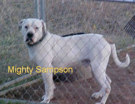 Mighty Sampson