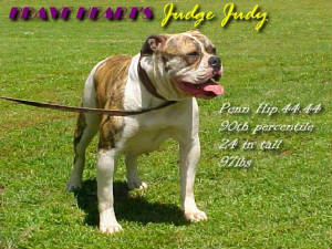 CH Brave Heart's Judge Judy PH-0.44/0.44