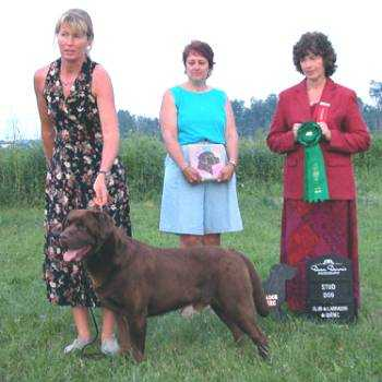 AKC/CAN CH Boothgate Chief Producer