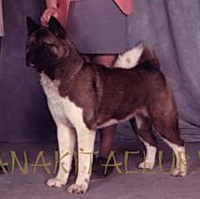 AKC CH Big-O Book's Sacha of W Winds
