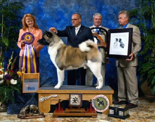 BISS AKC/MEX CH Minda's Kiss The Girls