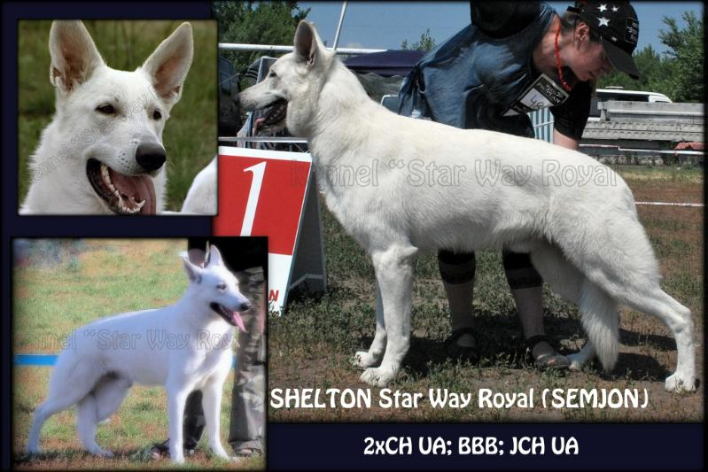 CH VETERANS, BBB; 2xCH UA; JCH UA SHELTON ot Star Way *SEMYEN* (kennel `Star Way Royal`)