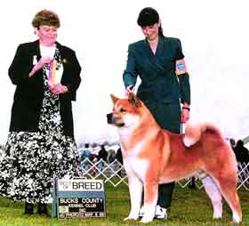 AKC CH Akiko's Lord Of The Rings