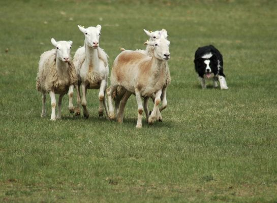 An Introduction to Herding