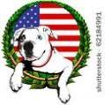 Aphrodities American Bulldogs